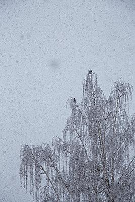 Two birds - p1650m2258642 by Hanna Sachau