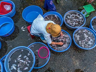 Fischmarkt in Vietnam  - p393m1452255 von Manuel Krug