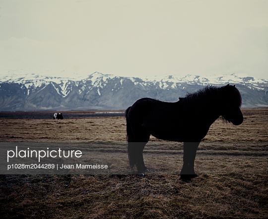 Icelandic horse, Iceland - p1028m2044289 von Jean Marmeisse