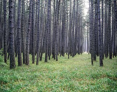 Wald - p1205m1065996 von Klaus Pichler