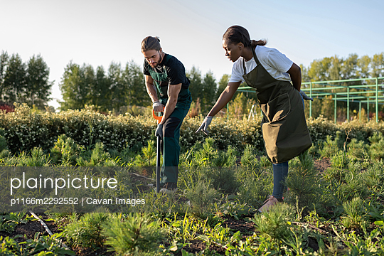 Diverse gardeners transplanting plants on farm - p1166m2292552 by Cavan Images