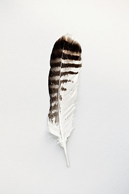Feather - p1006m1040350 by Danel