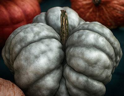 Gnarled Pumpkin - p1154m1193289 by Tom Hogan