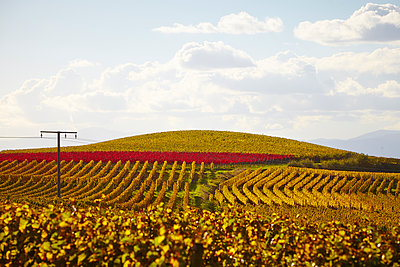 Hügel Weinbau - p1312m1207413 von Axel Killian