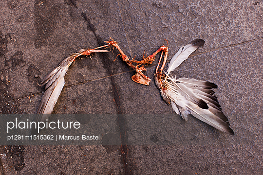 Pigeon wings - p1291m1515362 by Marcus Bastel
