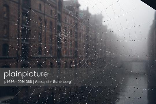 Spider web - p1696m2291366 by Alexander Schönberg