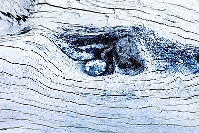 Knothole - p1168m1077683 by Thomas Günther