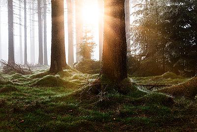 Morgenstimmung im Thüringer Wald - p1168m1514882 von Thomas Günther