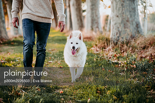 Dog walking with man at forest - p300m2225503 by Eva Blanco