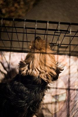 Animal shelter - p1076m987599 by TOBSN
