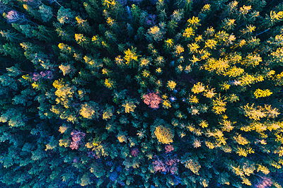 Aerial view of forest - p312m1533444 by Mikael Svensson