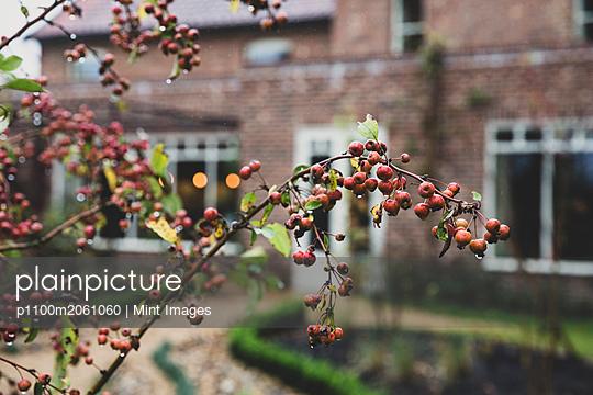 p1100m2061060 von Mint Images