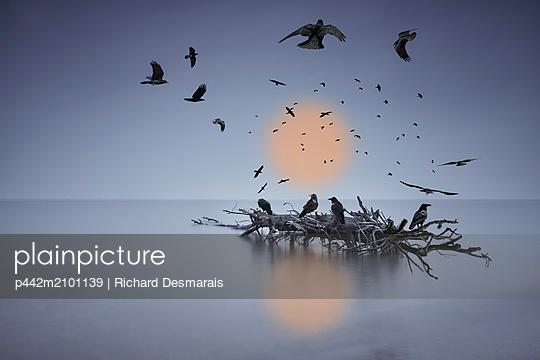 p442m2101139 von Richard Desmarais