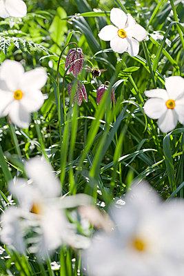 Frühling - p781m823238 von Angela Franke
