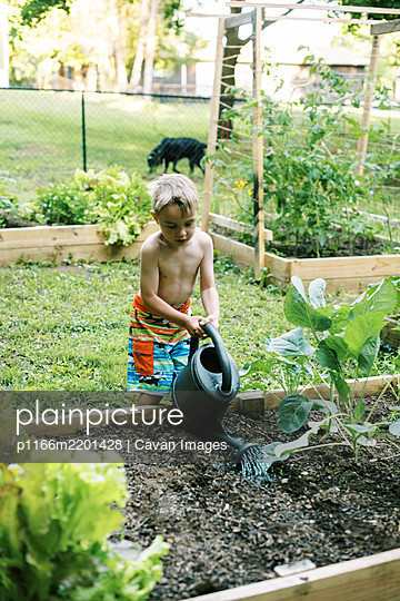 Little boy watering in some carrot seed - p1166m2201428 by Cavan Images