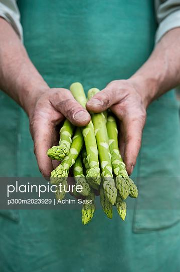 Man holding bundle of organic green asparagus in hands - p300m2023929 von Achim Sass
