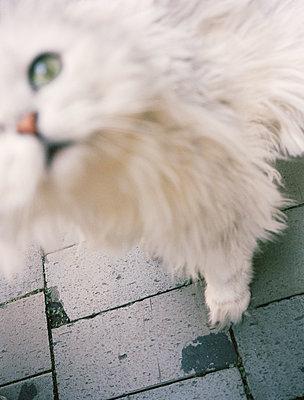 Katze - p751m1584801 von Dieter Schwer