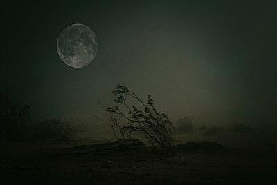 Moon - p1190m1563524 von Sarah Eick