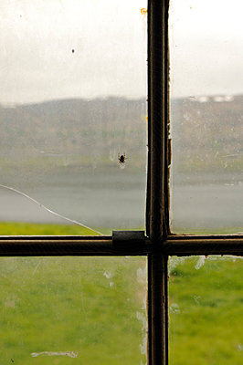 Spider at the window - p470m934098 by Ingrid Michel
