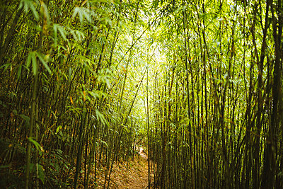 View along narrow footpath through dense bamboo forest. - p1100m2164722 by Mint Images