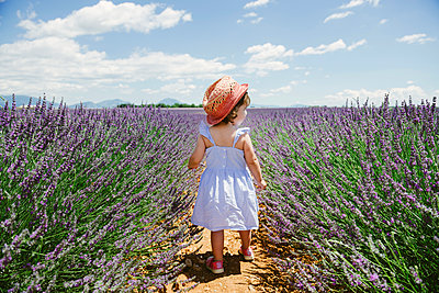 France, Provence, Valensole plateau, rear view of toddler girl in purple lavender fields in the summer - p300m2012549 by Gemma Ferrando