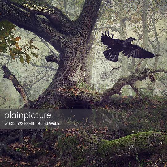 Black Winged Messenger Part VII - p1633m2210048 by Bernd Webler
