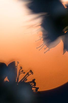 Flowers - p1682m2260724 by Régine Heintz