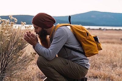 USA, North California, bearded man examining a plant near Lassen Volcanic National Park - p300m2059121 by Kike Arnaiz