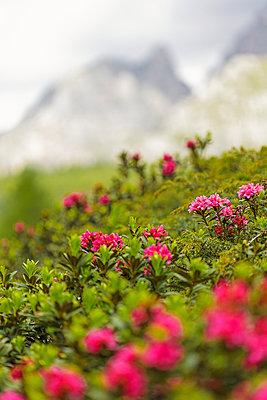Flowers - p322m938871 von Simo Vunneli