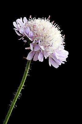 Botany - p5500014 by Thomas Franz