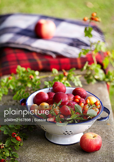 Foraged fruit and berries  Victoria Plums  Apples Rosehip   on a bench in garden with blankets - p349m2167898 by Sussie Bell
