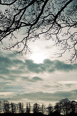 Cloudy sky and sun framed by bare branches - p597m2038635 by Tim Robinson