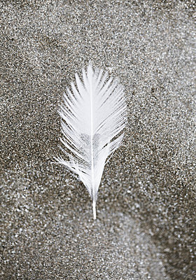 Feather - p873m2005026 by Philip Provily