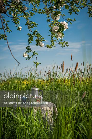 Picknick unter einem blühenden Apfelbaum - p1288m1161437 von Nicole Franke