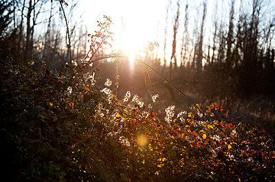 Herbst - p1116m904002 von Ilka Kramer