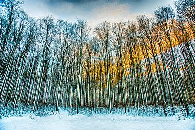 Wald - p1205m1515973 von Toni Anzenberger