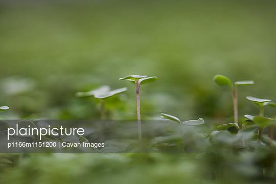 p1166m1151200 von Cavan Images