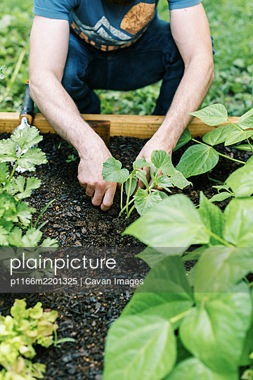 Photo of a man working in the vegetable garden - p1166m2201325 by Cavan Images