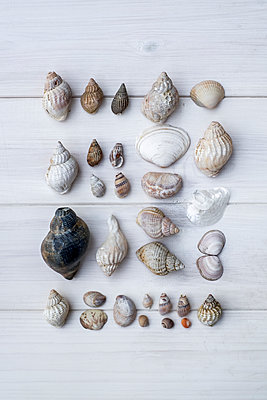 Shells on a white wooden floor - p1228m1123024 by Benjamin Harte