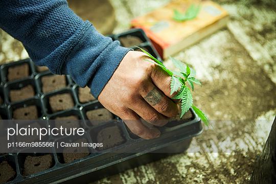 p1166m985566f von Cavan Images