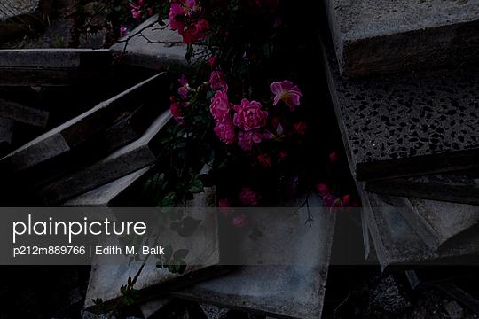 p212m889766 von Edith M. Balk