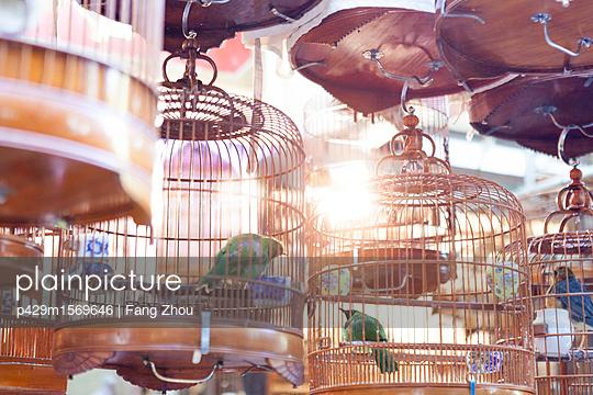 p429m1569646 von Fang Zhou