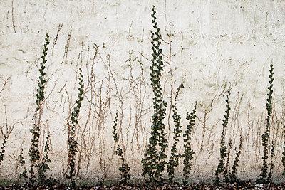 Hauswand - p417m1006749 von Pat Meise
