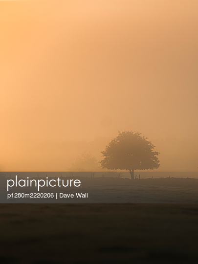 Single tree in the fog at sunrise - p1280m2220206 by Dave Wall