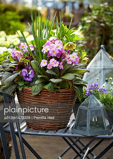 Flowers growing in basket