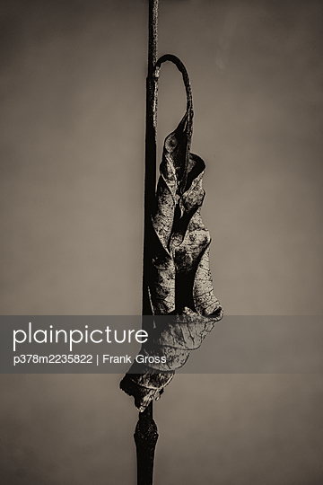 Still life of dried leaf - p378m2235822 by Frank Gross