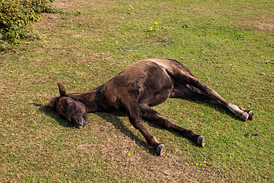 Sleeping Horse - p1291m1548053 by Marcus Bastel