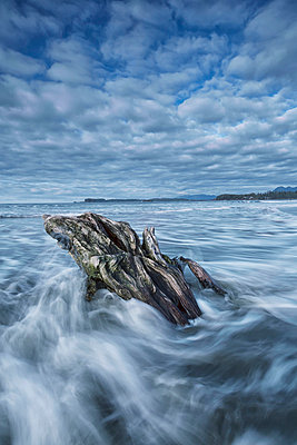 The tide coming in and flowing around a sunken piece of driftwood chesterman beach;Tofino vancouver island british columbia canada - p442m804916f by Robert Postma