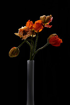 Vase mit Mohnblüten - p587m2115476 von Spitta + Hellwig