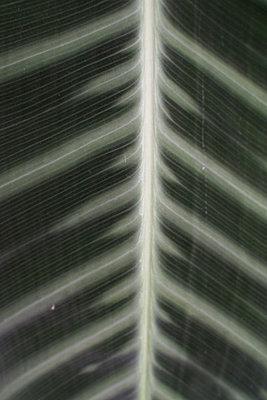 Blattstruktur - p1422m1486745 von Vivian Rutsch
